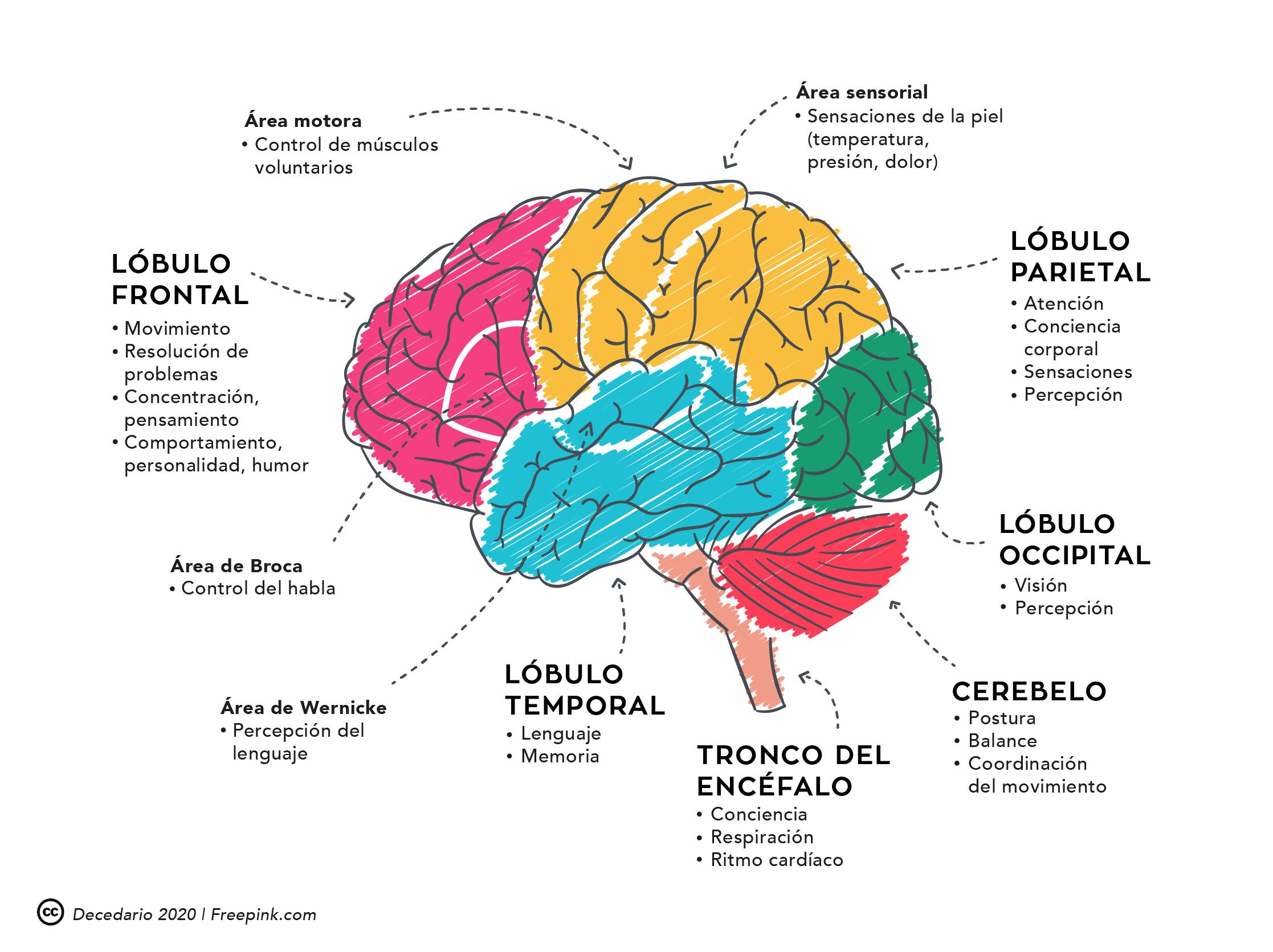 Funciones cognitivas que se trabajan en Decedario